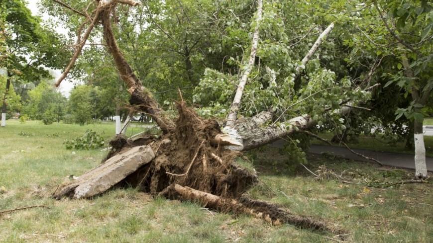 "Фото: Максим Кулачков (МТРК «Мир») ""«Мир 24»"":http://mir24.tv/, гроза, упало дерево, дерево, ураган, шторм, ветер, машина, ливень, дождь"