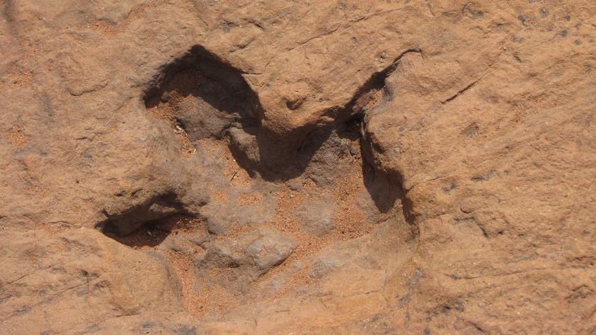 В Китае нашли следы динозавров мелового периода