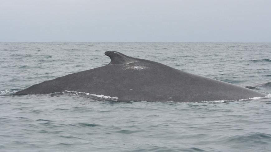 В Таиланде кит проглотил 80 пакетов и умер