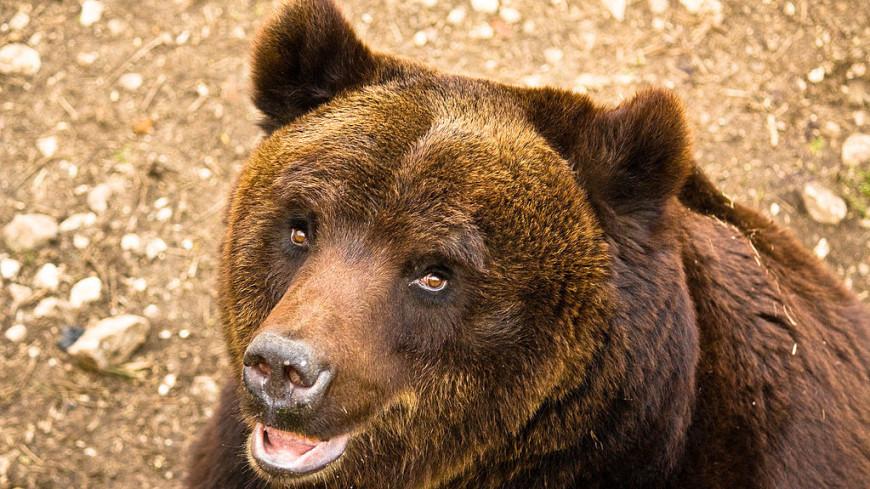 Бурый медведь принял оздоровительную ванну и попал на видео