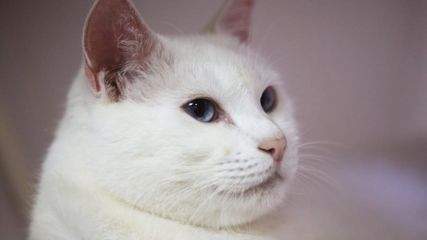Оракул ЧМ-2018 года кот Ахилл сделал прогноз на матч Иран – Марокко
