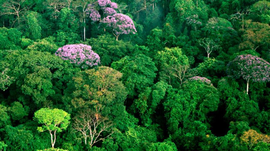 Реликтовые леса Южной Америки оказались искусственными
