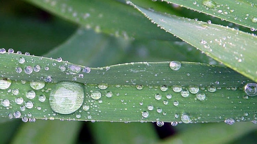 Приметы 7 июня: опасайтесь утренней росы