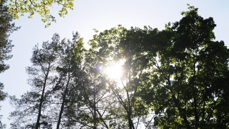 "Фото: Сергей Минеев, ""«Мир 24»"":http://mir24.tv/, лес, солнце"