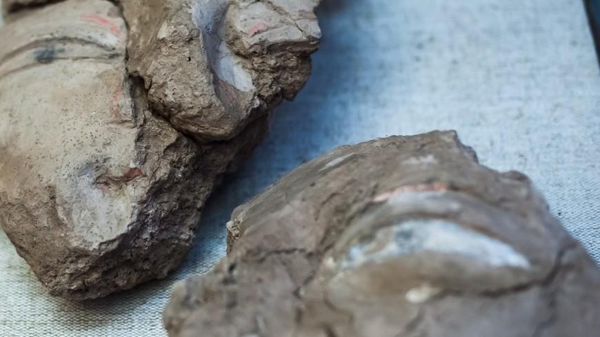 Китайский фермер случайно нашел черепаху Юрского периода