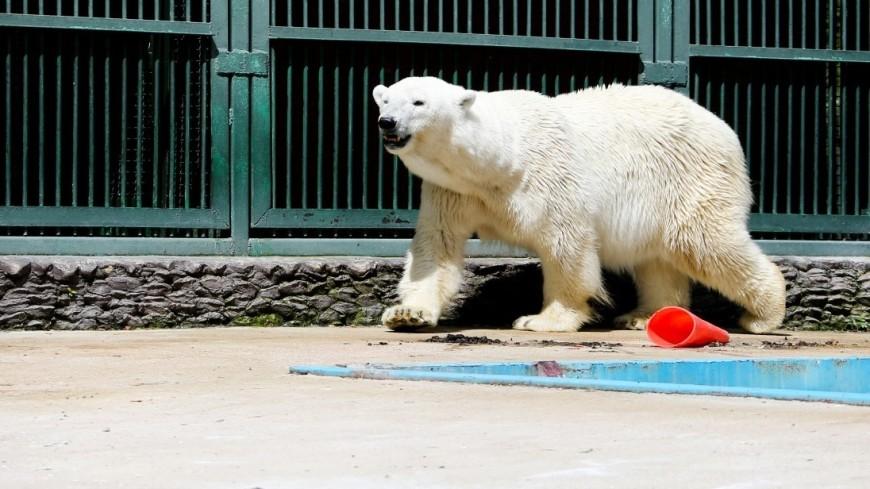 зоопарк, зоопитомник, животные, медведь, белый медведь,