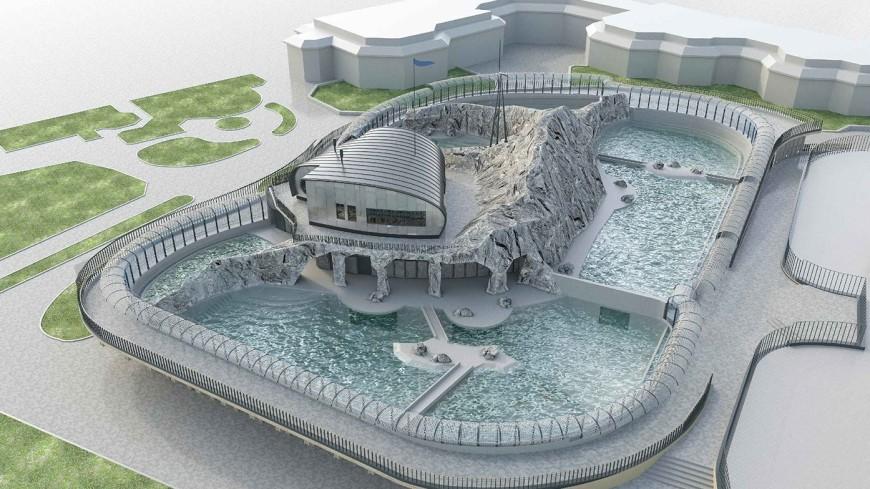 Нерпы и тюлени: для обитателей Московского зоопарка построят бассейны