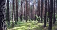 В грузинском лесу случайно нашли древний монастырь