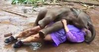 «Обнимашки» в грязи: веселый слоненок напал на туристку и ей это понравилось