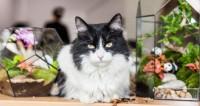 «Кошкин день». Мифы и правда о котиках