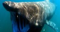 Розовые плавки помогли австралийцу спастись от акулы