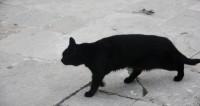 Фотография убитой горем кошки растрогала Сеть