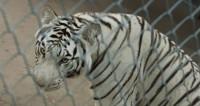 Обитатели Московского зоопарка устали ждать весну