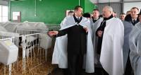 Лукашенко предложил животноводам искать новые рынки сбыта