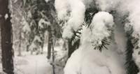 Птицы опять улетели: Сахалин погрузился в снежный апокалипсис