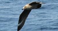 В Антарктиде птицы обокрали латвийских геологов