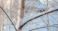 Минувшая ночь в Москве выдалась самой морозной с начала весны