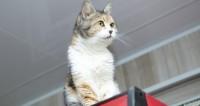 Давайте жить дружно! Толстый кот-миротворец покорил соцсети