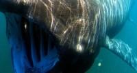 У берегов Калифорнии заметили светящуюся акулу