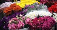 Женщины – великая сила: ветеран из Баку 8 марта получает подарки