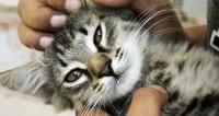Житель Исландии взял в заложники котенка. И угодил в тюрьму