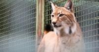 Ко Дню защиты Земли: как сохранить «краснокнижных» животных