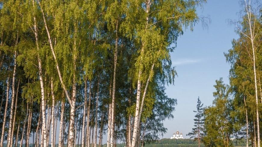 Вид на реку и храм (г. Ярославль),Ярославль, река, лес, береза, природа, церковь, храм, вера, ,Ярославль, река, лес, береза, природа, церковь, храм, вера,