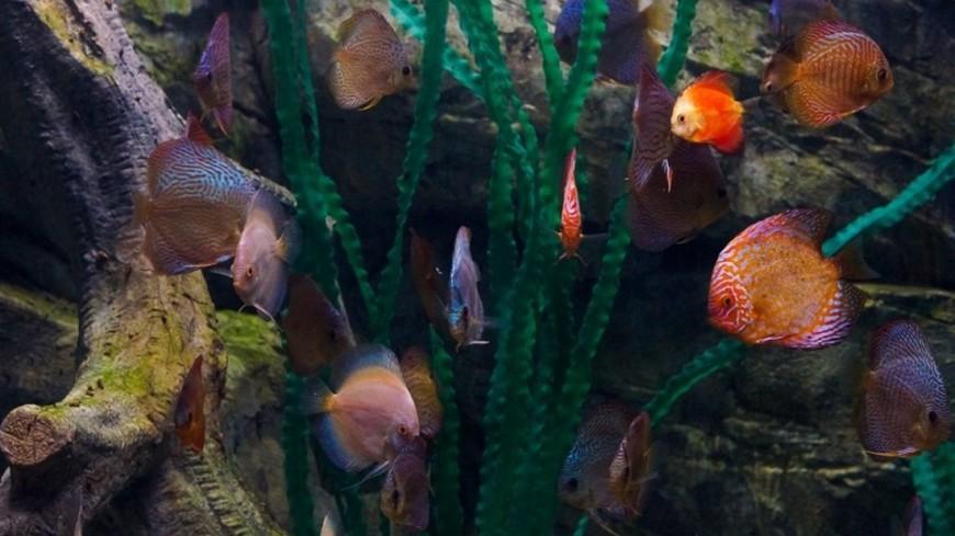 """Фото: Елизавета Шагалова, """"«МИР 24»"""":http://mir24.tv/, аквариум, рыбы"""