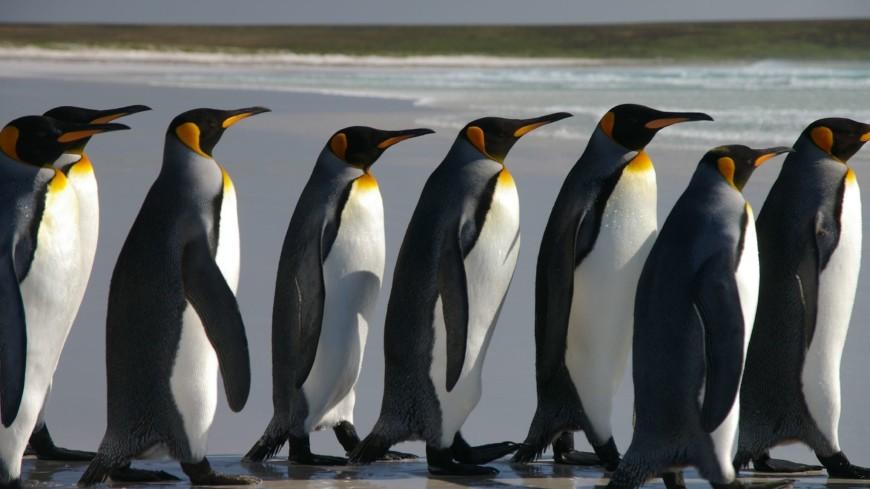 В Антарктиде случайно нашли 1,5 миллиона пингвинов