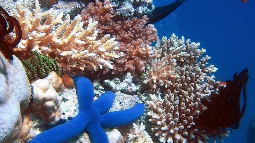 Исчезновение коралловых рифов приведет к росту океанских волн