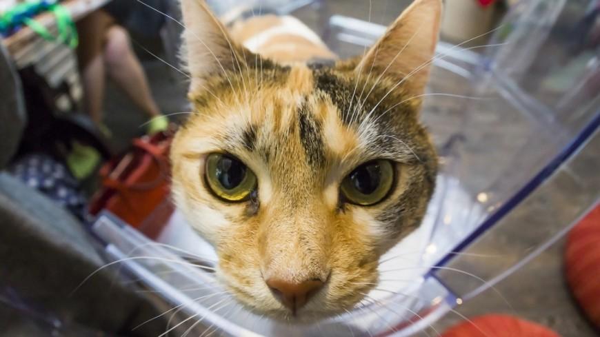 По наглой морде: нейросеть научили распознавать кошек