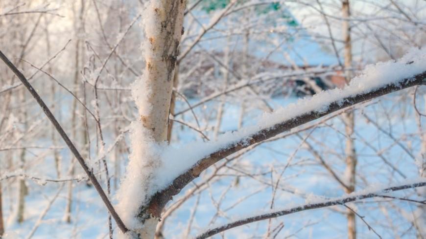 Зима (снег, сугроб, холод, мороз, лес, природа, дерево)