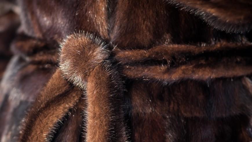 Шуба,зимняя одежда, шуба, ,зимняя одежда, шуба,