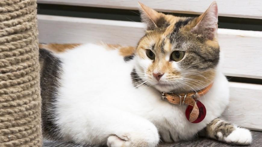 "Фото: Татьяна Константинова, ""«Мир 24»"":http://mir24.tv/, кошка, кот"