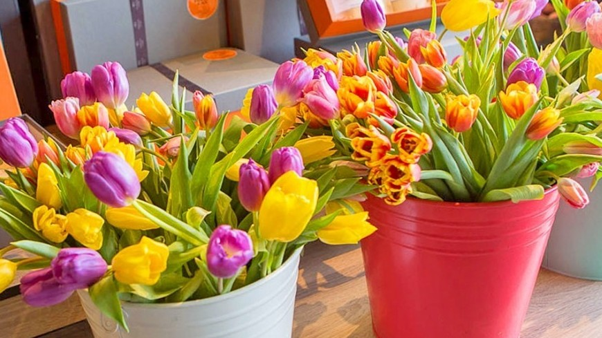"""Фото: Алан Кациев (МТРК «Мир») """"«Мир 24»"""":http://mir24.tv/, цветы в горшке, цветы, тюльпаны, цветы в ведре"""