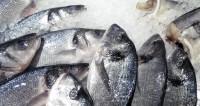 На ПМЭФ-2018 обсудят факторы устойчивости рыбной индустрии