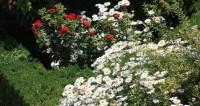 На любой запах и цвет: в московском «Эрмитаже» открылся цветочный базар