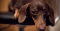 Десять правил выбора собаки