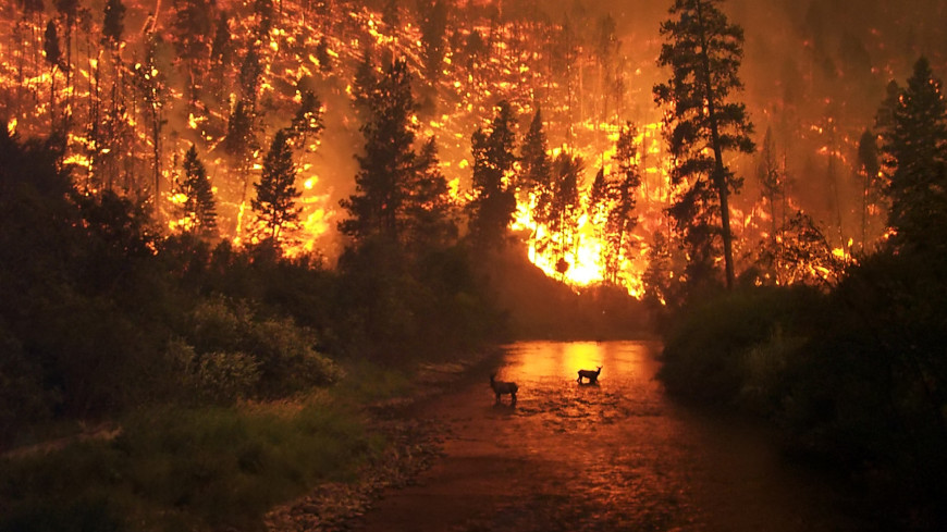 Лесные пожары угрожают почти 60 регионам России