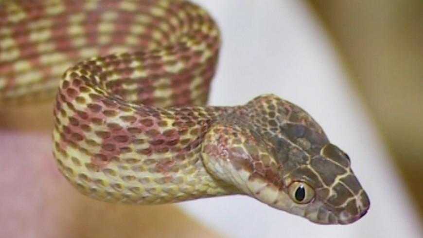 "Скриншот: ""«МИР 24»"":http://mir24.tv/, змея"