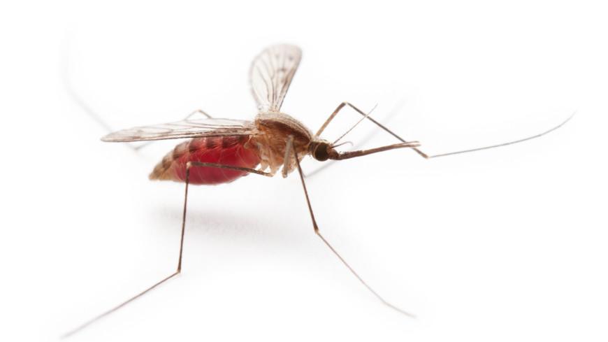 «Комароапокалипсис». Вампиры и оборотни – комары не так просты, как кажутся