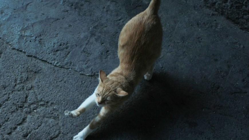 «Вежливая кошка» покорила соцсети умением стучать в дверь