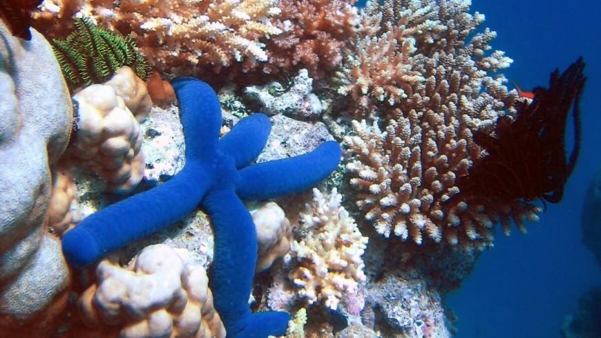 Гавайи хотят запретить солнцезащитные кремы, чтобы спасти кораллы