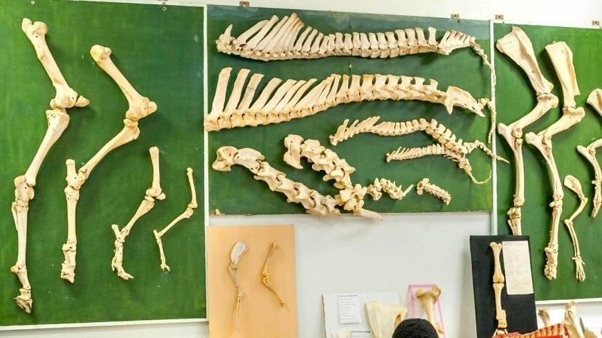 Длинные ноги помогли древним птицам пережить вымирание