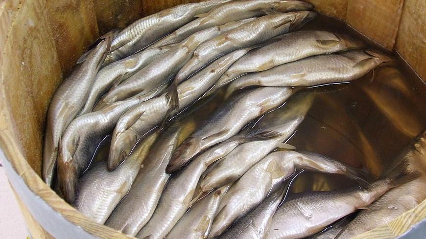 Магаданские рыбаки тоннами собирают выбросившуюся на мель сельдь
