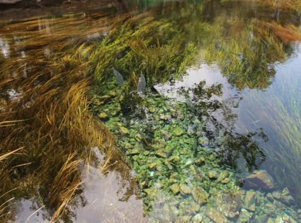 Российские ученые получают воду из воздуха