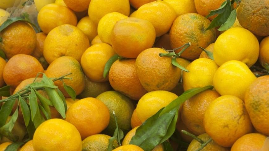 "Фото: Елена Андреева, ""«Мир24»"":http://mir24.tv/, фрукты, мандарины"