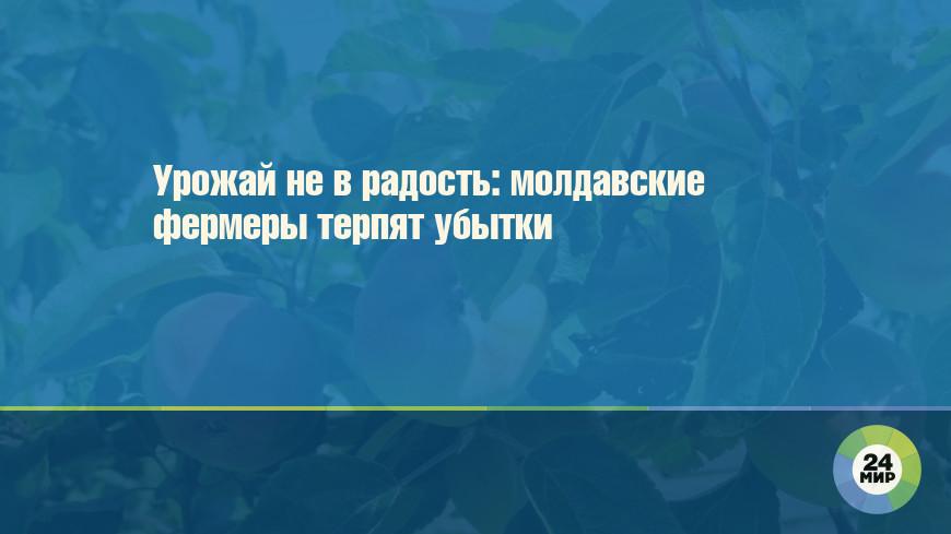 Урожай не в радость: молдавские фермеры терпят убытки