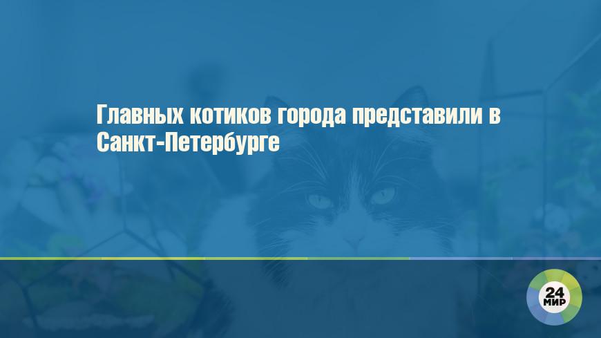 Главных котиков города представили в Санкт-Петербурге