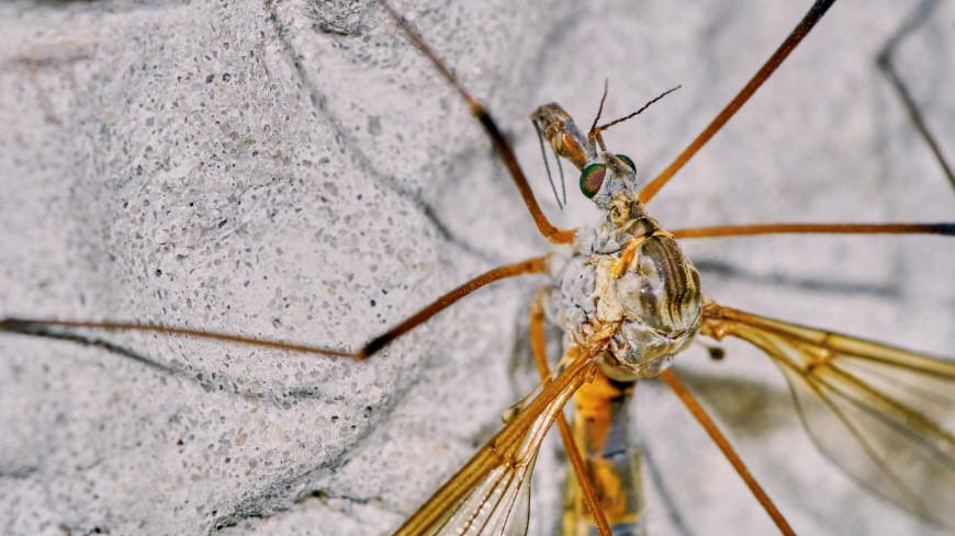 Малярийные комары оказались ровесниками динозавров
